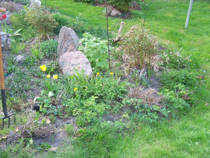 Garten_vorher